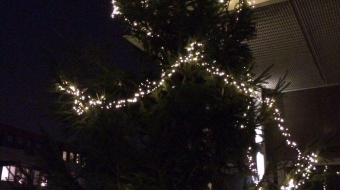 Kerstboom 27